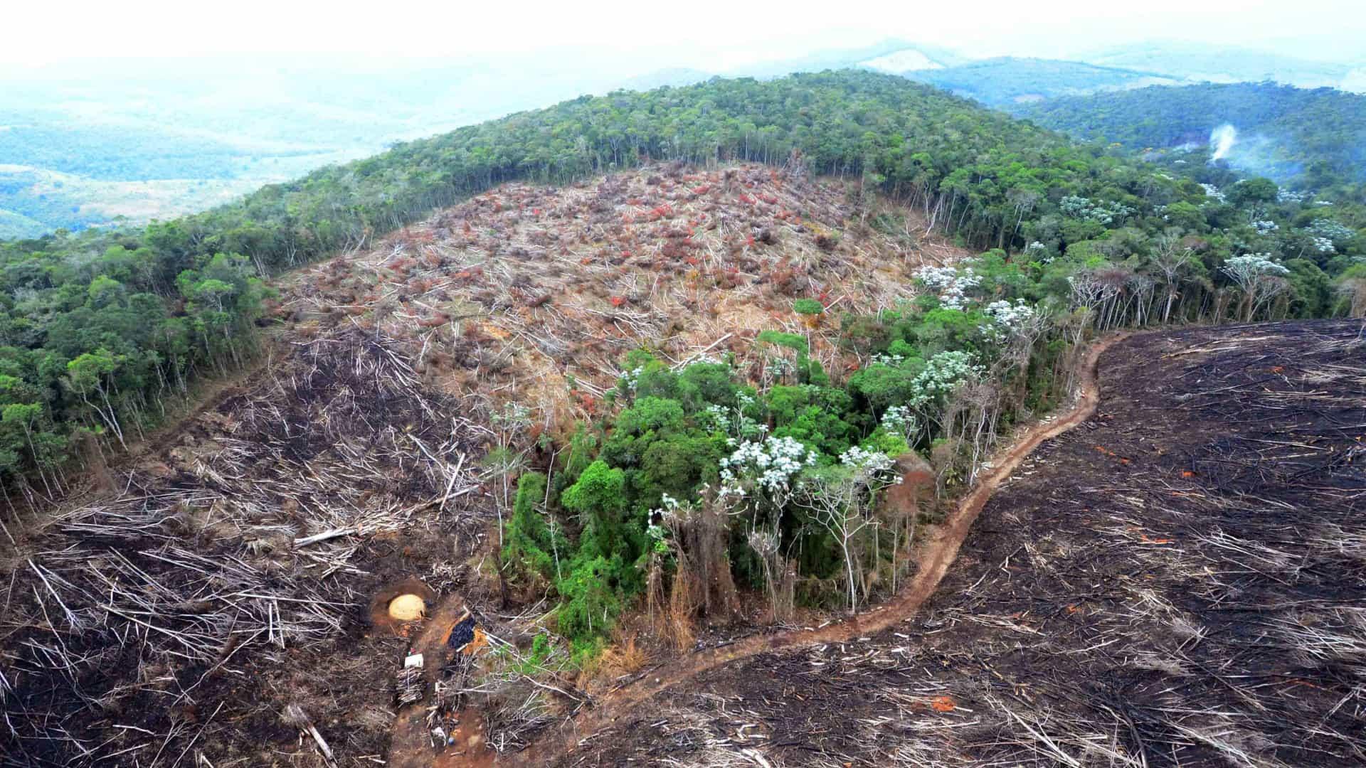 Desmatamento em julho chega a 2.254 km², um terço dos últimos 12 meses