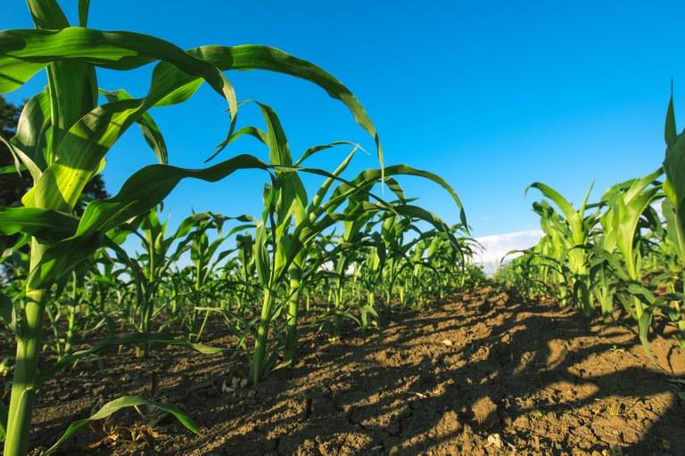 Contratação do crédito rural chega a R$ 92,6 bilhões e cresce 21%