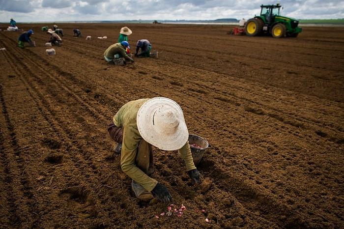Geração de emprego no campo limita queda de população ocupada no agronegócio como um todo