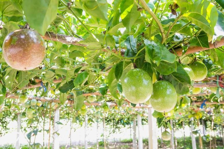 Publicada relação de dez produtos da agricultura familiar com bônus em agosto