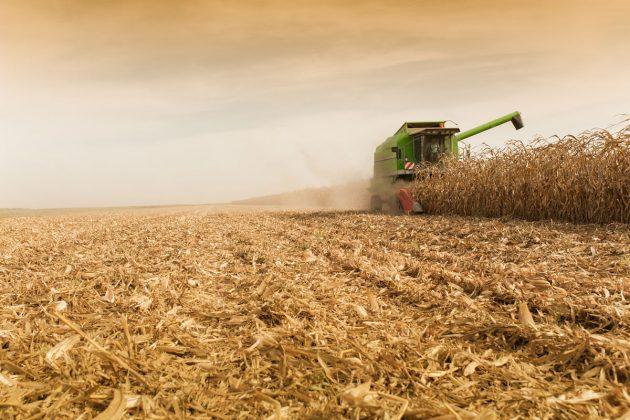 Quebra na safrinha faz Paraná entrar na briga para comprar milho